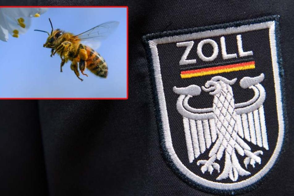 Helfen Bienen bald bei der Polizeiarbeit?