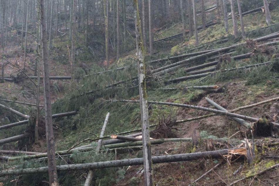 Im Wald lauert mit herabstürzenden Ästen die tödliche Gefahr. (Symbolbild)