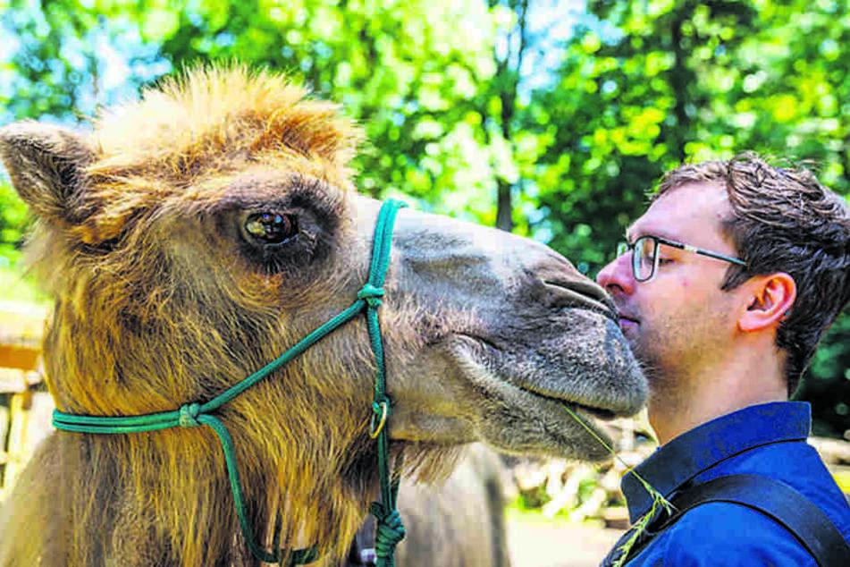 Ich glaub', mich knutscht ein Kamel! Höckertier Kim (12) begrüßt TAG24-Reporter Hermann Tydecks (32) äußerst körpernah und zärtlich.