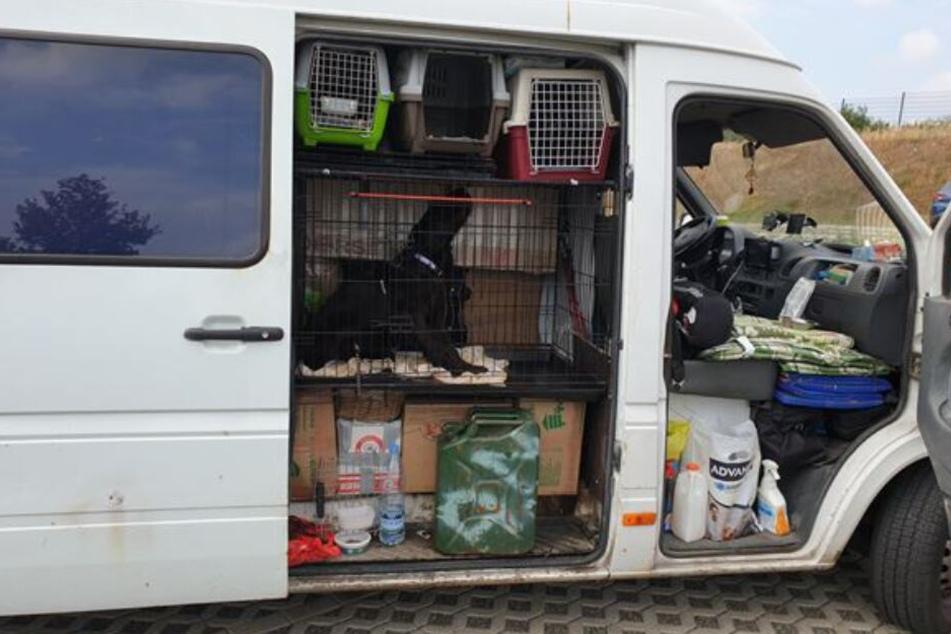 Völlig überladen: Polizei stoppt ungewöhnlichen Hundetransport aus Osteuropa