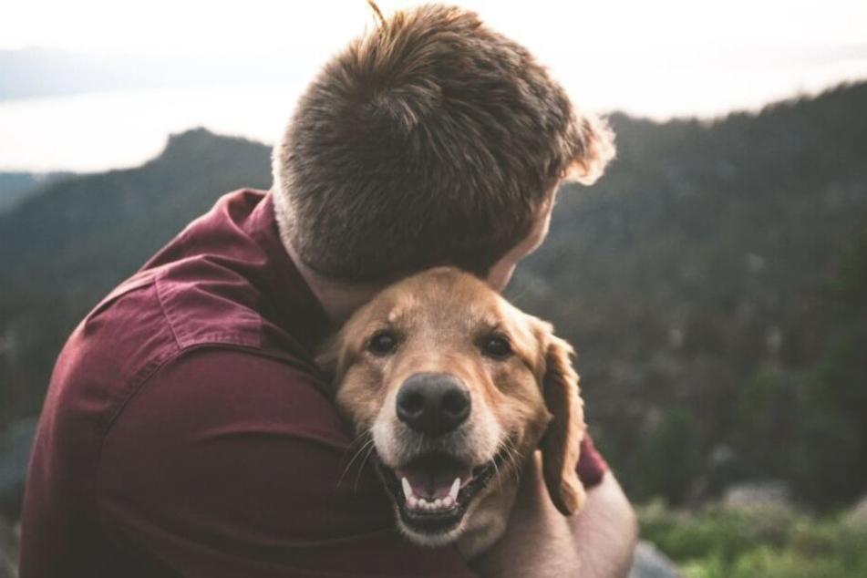 Nähe und Aufmerksamkeit lässt das Tier mit dem Bellen aufhören.