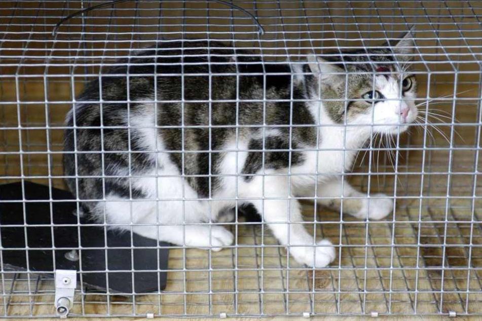 Eine Katze ist in Thüringen an einem Tellereisen verendet.