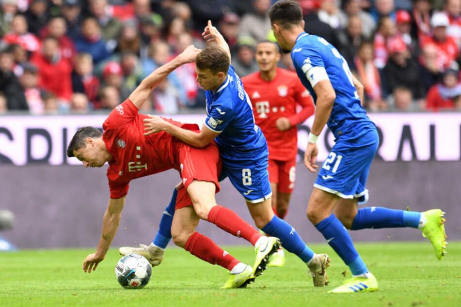 Robert Lewandowski (l.Matthias Balk_dpa) von Bayern wird im Zweikampf mit Dennis Geiger von Hoffenheim zu Fall gebracht.