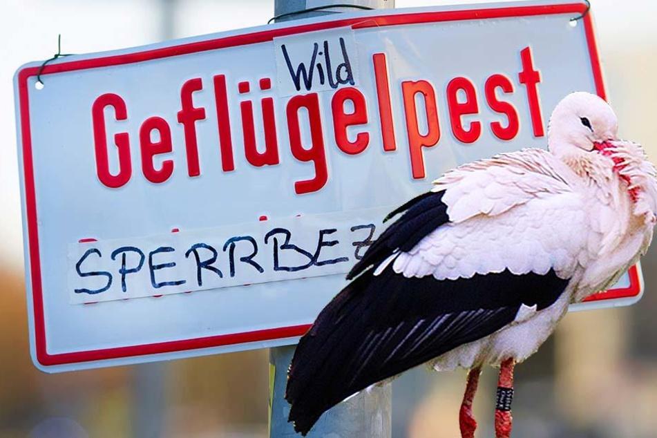 Wegen Vogelgrippe? Tierpark Gotha geschlossen