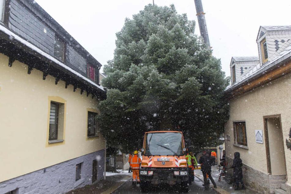 Beim Abtransport blieb der Baum in der engen Straße stecken.