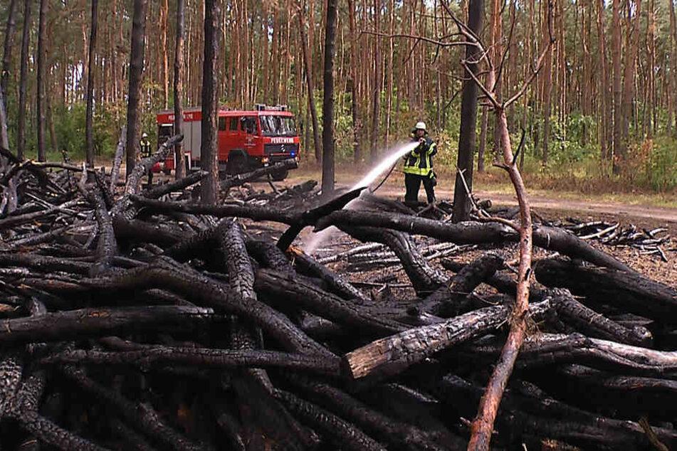 Der Feuerteufel steckte Holzstapel und einen Teil des Waldes in Brand. Für die Förster bedeutet das einen enormen finanziellen Verlust.
