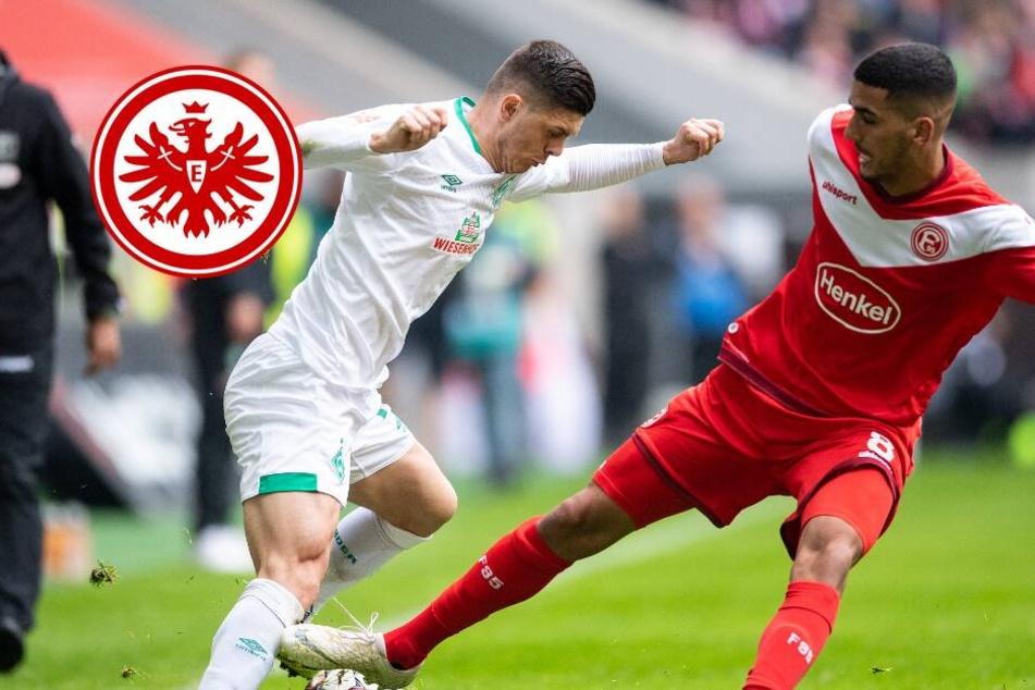 Keine Eintracht-Rückkehr! Barkok bleibt weiteres Jahr bei Fortuna Düsseldorf