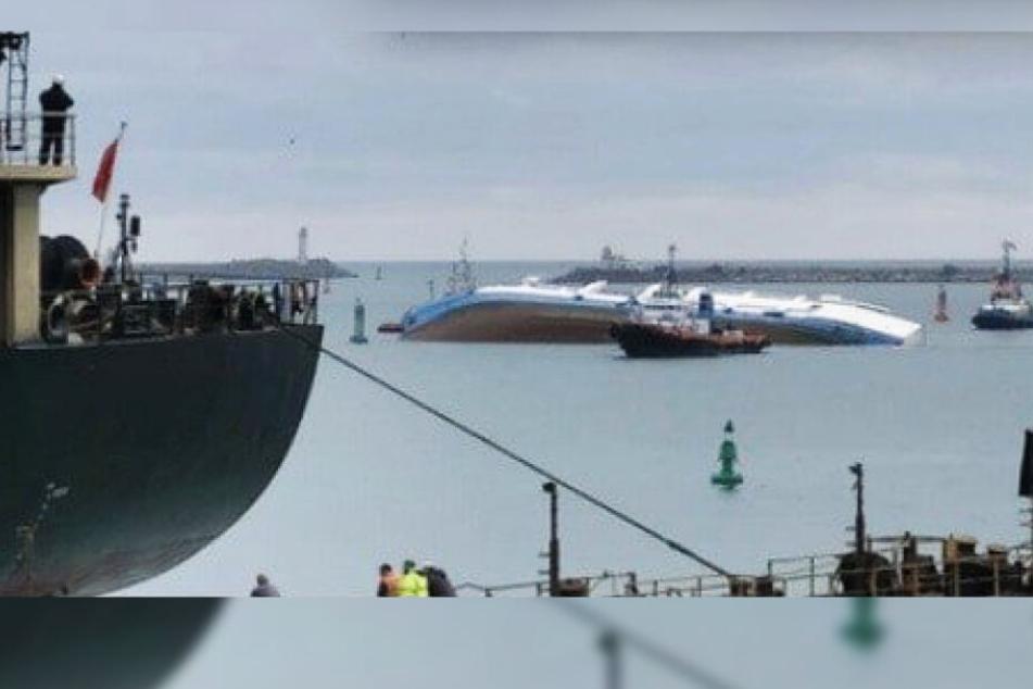 Schiff mit 14'600 Schafen an Bord in Rumänien gekentert