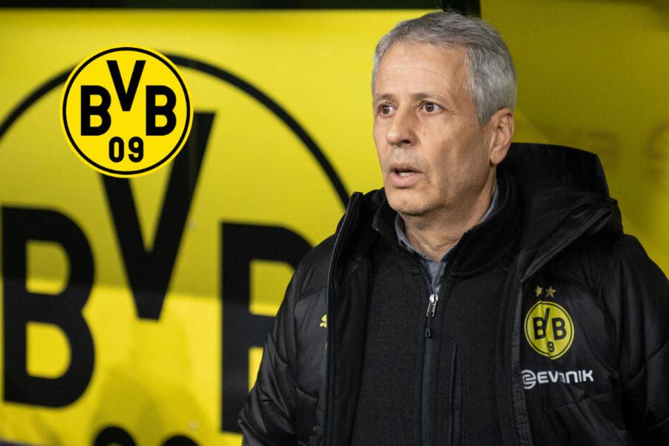 Nach 3:3-Blamage des BVB: Trainer Favre bekommt Endspiel