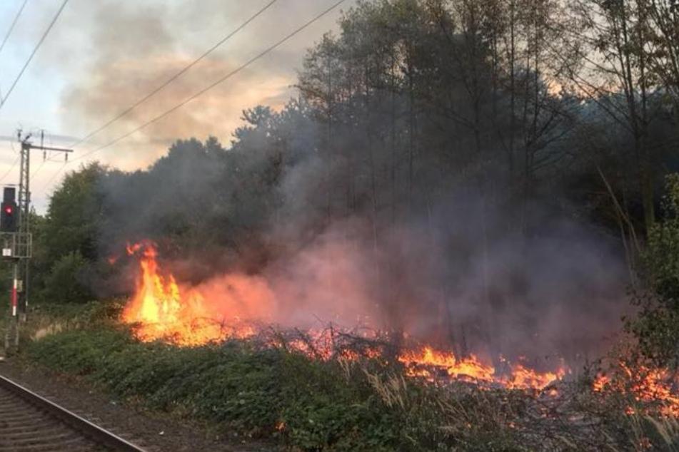 Der Böschungsbrand in Köln-Poll war am Dienstagabend (07.08.) ausgebrochen.