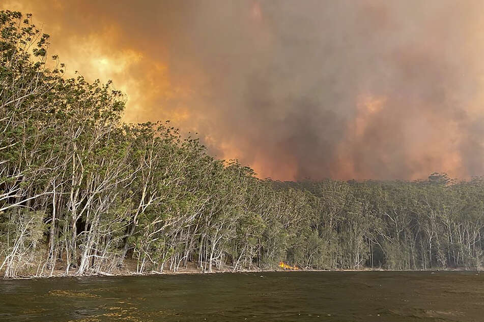 Rauchwolken steigen über einem Wald auf, in dem ein Buschfeuer wütet. (Archivbild)
