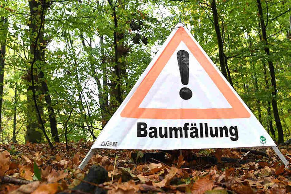 Baum kippt bei Fällarbeiten auf den Radweg: Frau verletzt