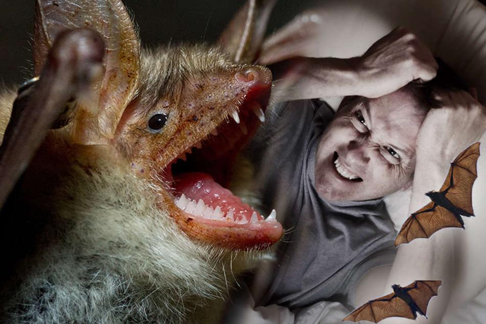 Wie im Horrorfilm: Fledermäuse überfallen Menschen nachts im Schlaf