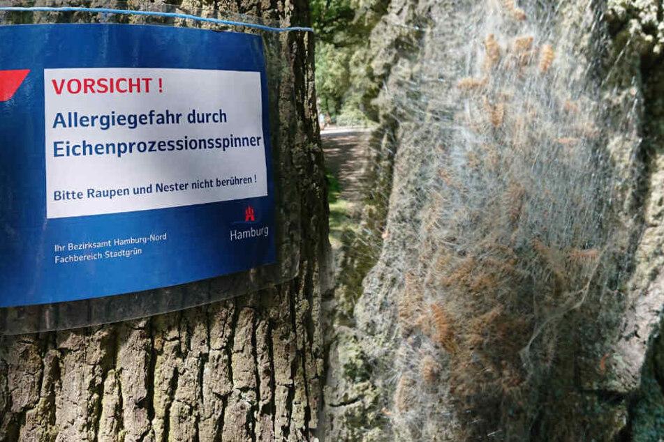 Hamburg: Vorsicht! Diesen Bäumen im Stadtpark solltet Ihr Euch lieber nicht nähern