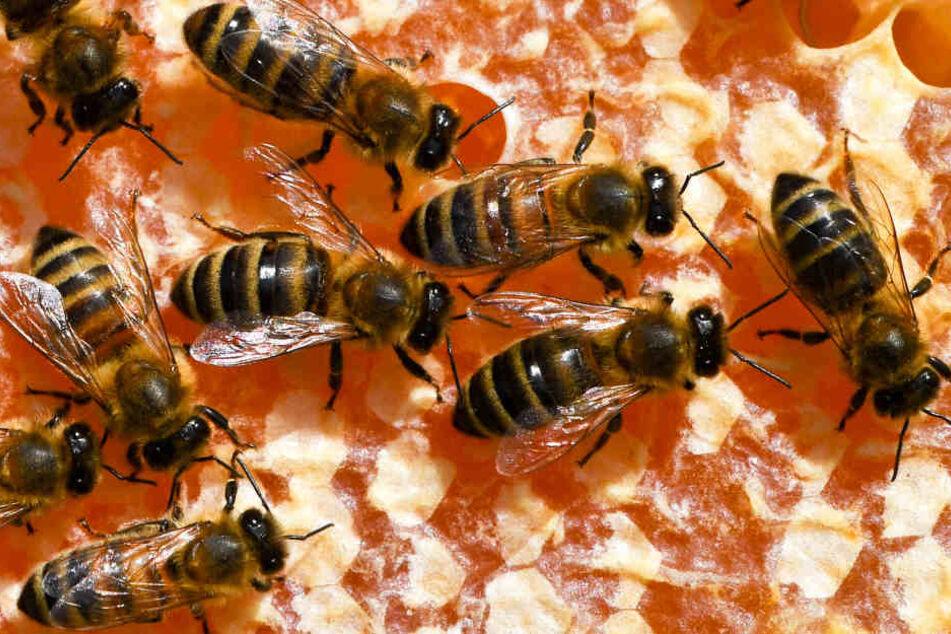 Bienen sind nicht nur nützlich, sondern auch für Menschen extrem wichtig.