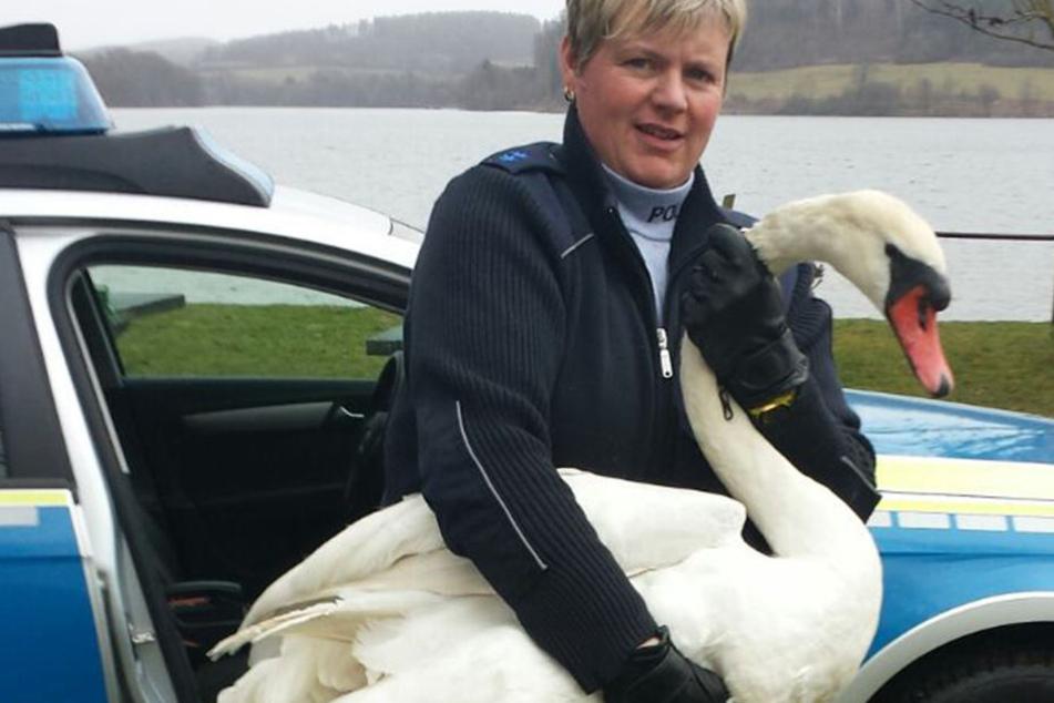 Sandy Weber (41) rettete dem edlen Vogel das Leben.