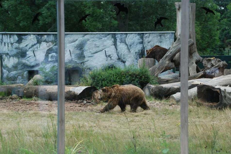 Das ehemalige Bärengehege wird zu einer Raubtieranlage umgebaut.
