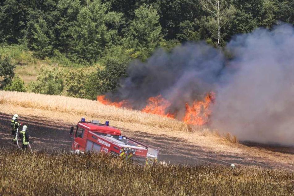 Bei Kreischa geriet während Mäharbeiten dieses Gerstenfeld in Brand. Auf einer Fläche von drei Hektar wurde das Getreide ein Raub der Flammen.