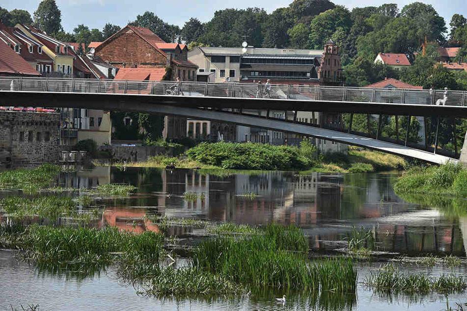 In der Neiße bei Görlitz haben die Pflanzen gerade Oberwasser - verrückt!