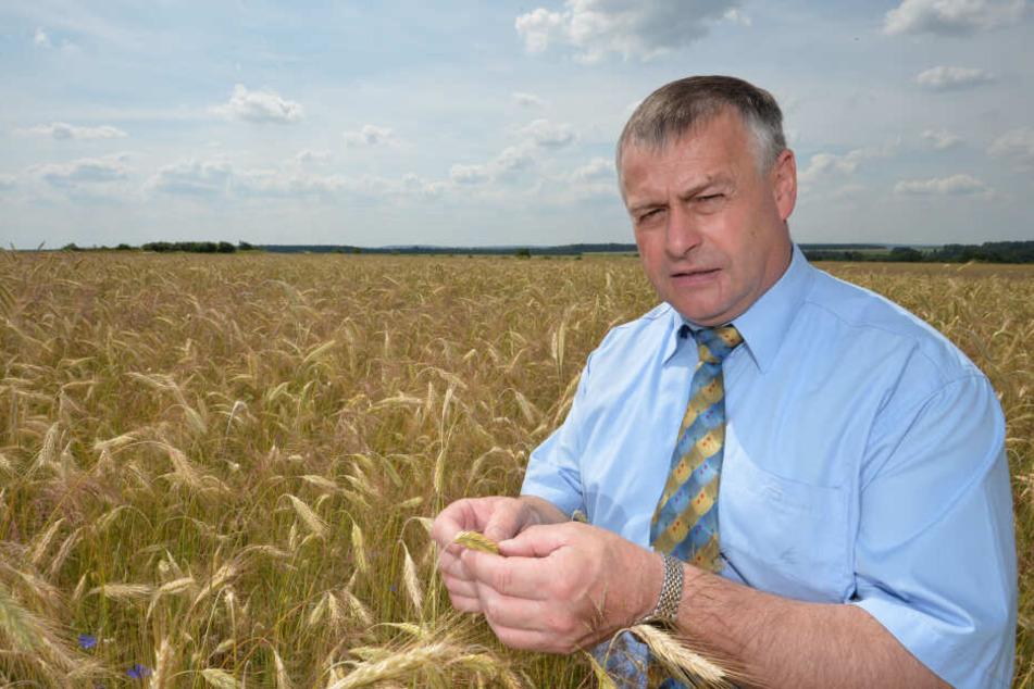 Präsident des bayerischen Bauernverbandes (BBV), Walter Heidl sieht den Ausbau der ökologischen Landwirtschaft als schwierig an. (Archivbild)