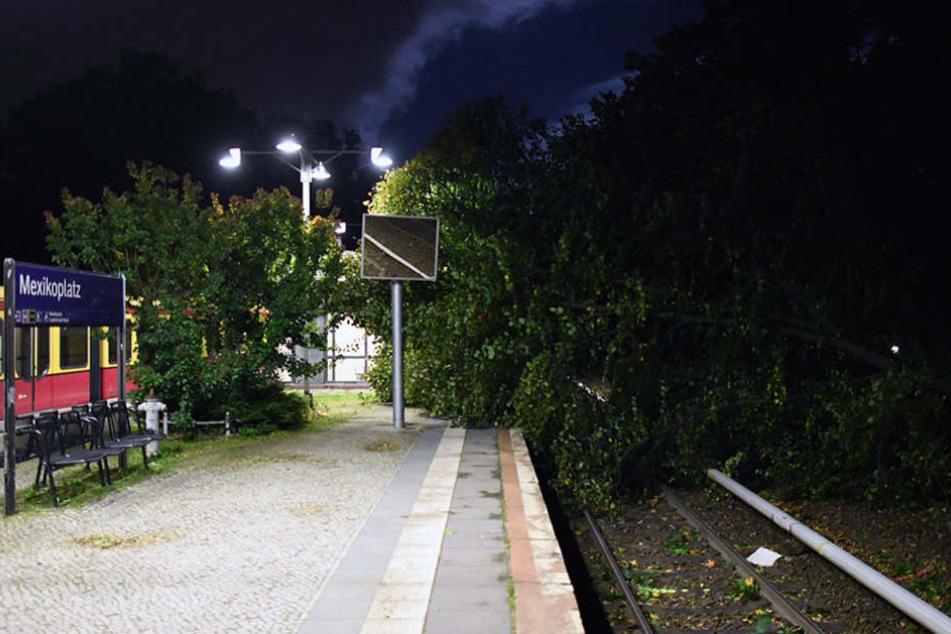 Am dem S-Bahnhof Mexikoplatz stürzte am Donnerstag ein Baum auf die Gleise. So wie hier, sah es an vielen Orten in Berlin aus.