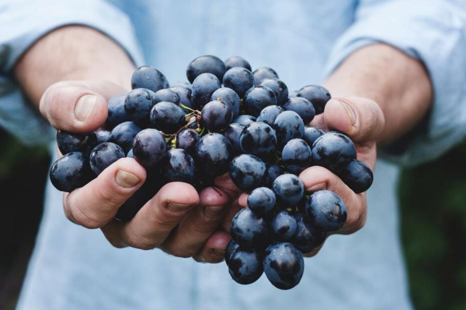 Tafeltrauben belegen Platz 3 der beliebtesten Obstsorten der Deutschen