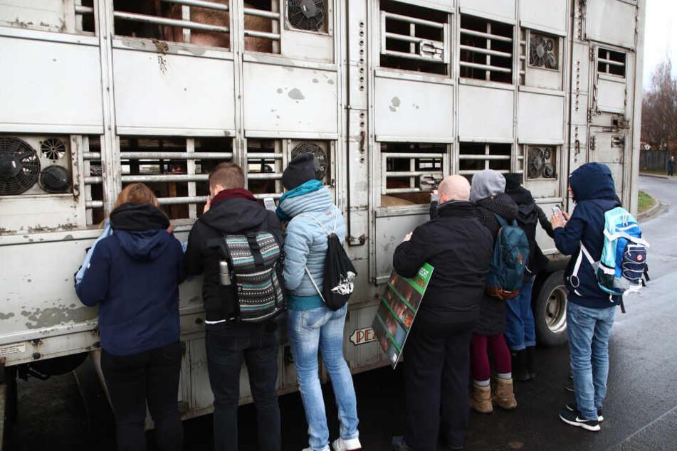 Bevor die Schweine weggefahren wurden, verabschiedeten sich die Aktivisten.