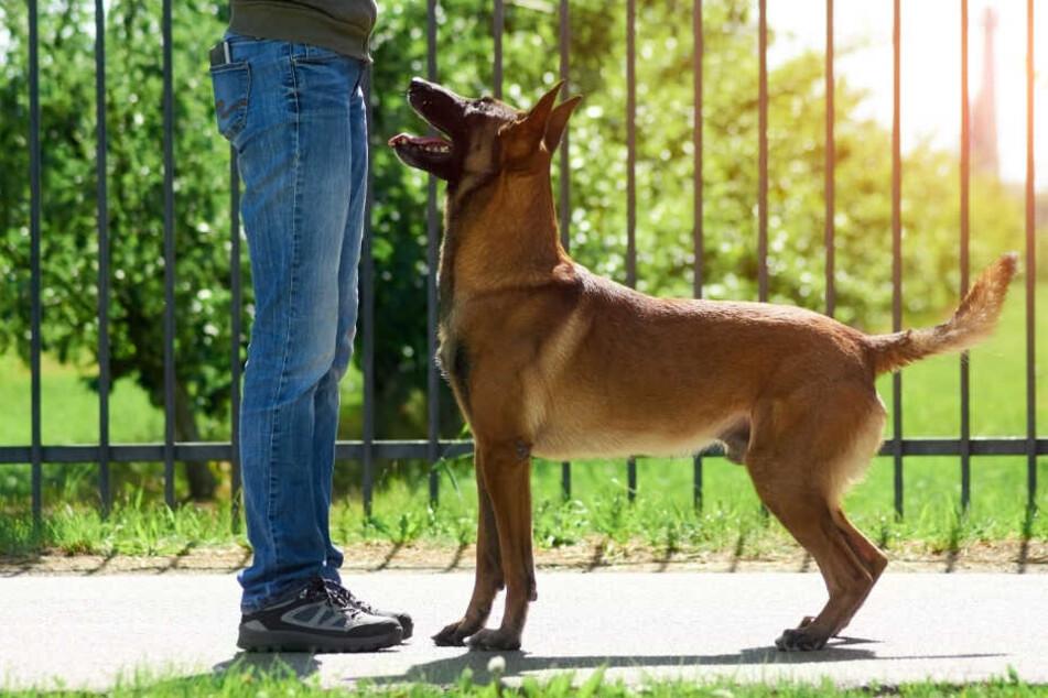 Hunde dürfen nicht mehr auf Bürgersteigen laufen. Das ist der schmerzhafte Grund