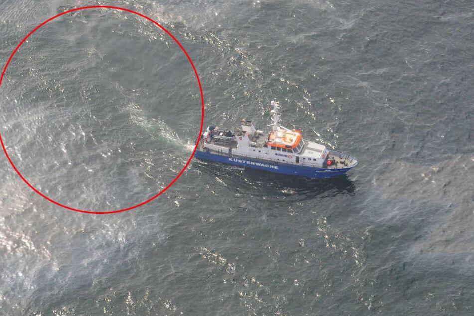 Umweltkatastrophe! 50 Kilometer lange Ölspur vor Helgoland