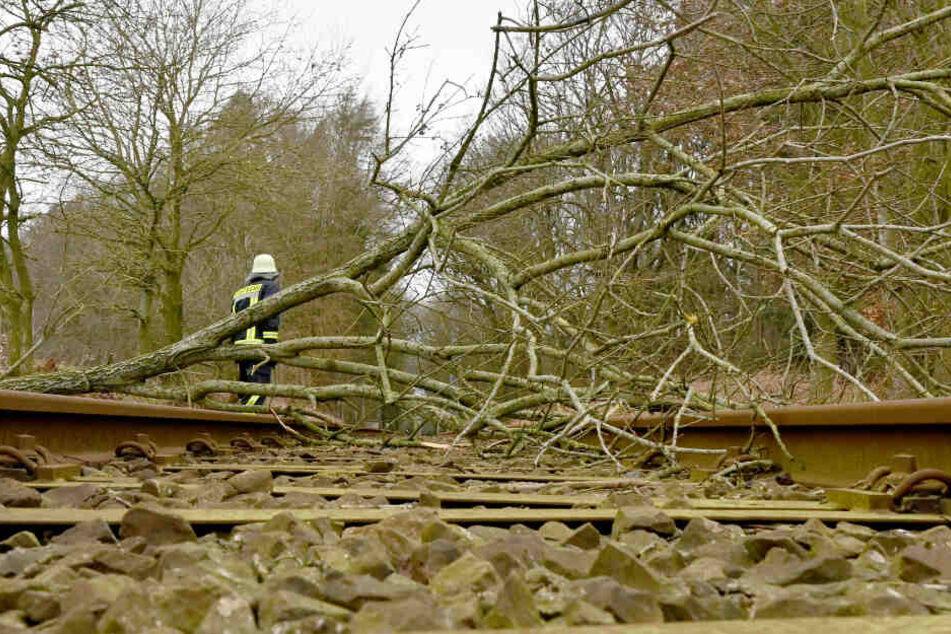 Ein vom Sturm umgeknickter Baum liegt auf der Bahnstrecke Neumünster-Heide in Schleswig-Holstein.