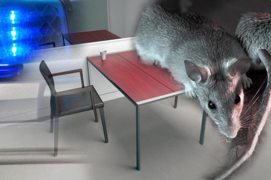Ratten, Schimmel, Verfall: Polizeiwachen in NRW bekommen Frischekur