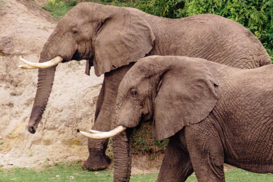 Die Wildtierdressur - etwa von Elefanten - ist ab sofort im Park gestrichen. (Symbolfoto)
