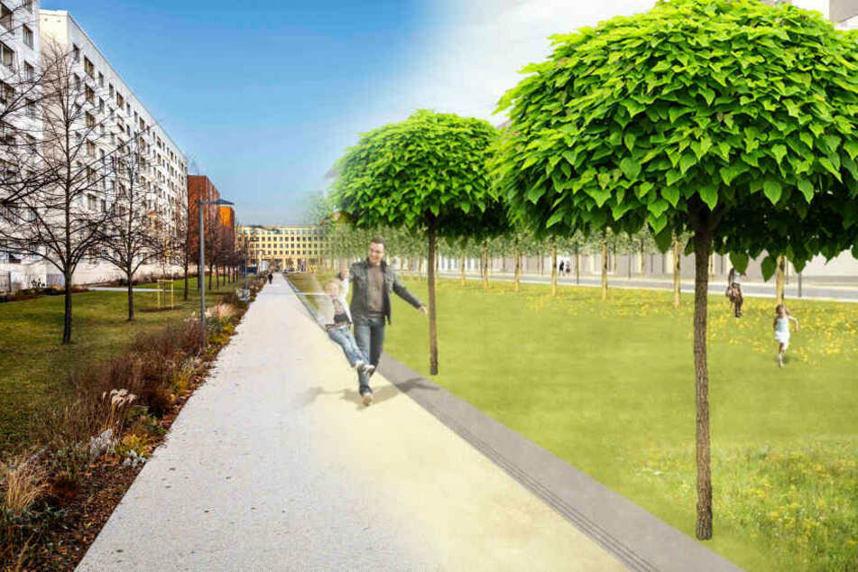 Dresden: Ein Wald für die Wallstraße: City-Flaniermeile soll noch grüner werden!