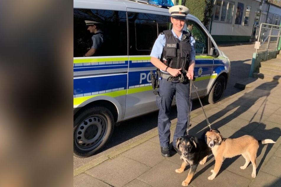 Hunde im Gleisbett gefunden: Süße Vierbeiner einfach ausgesetzt?
