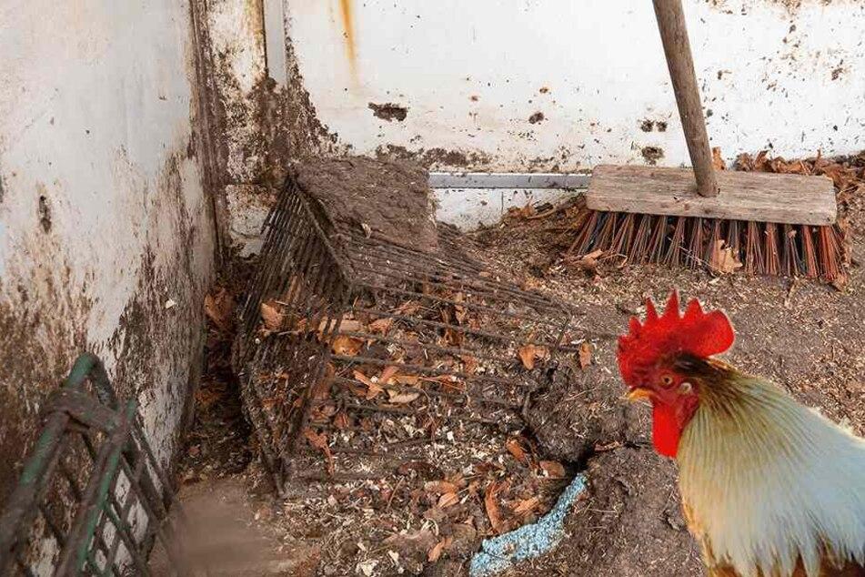Hobby-Bauer ließ seine Hühner fast verhungern