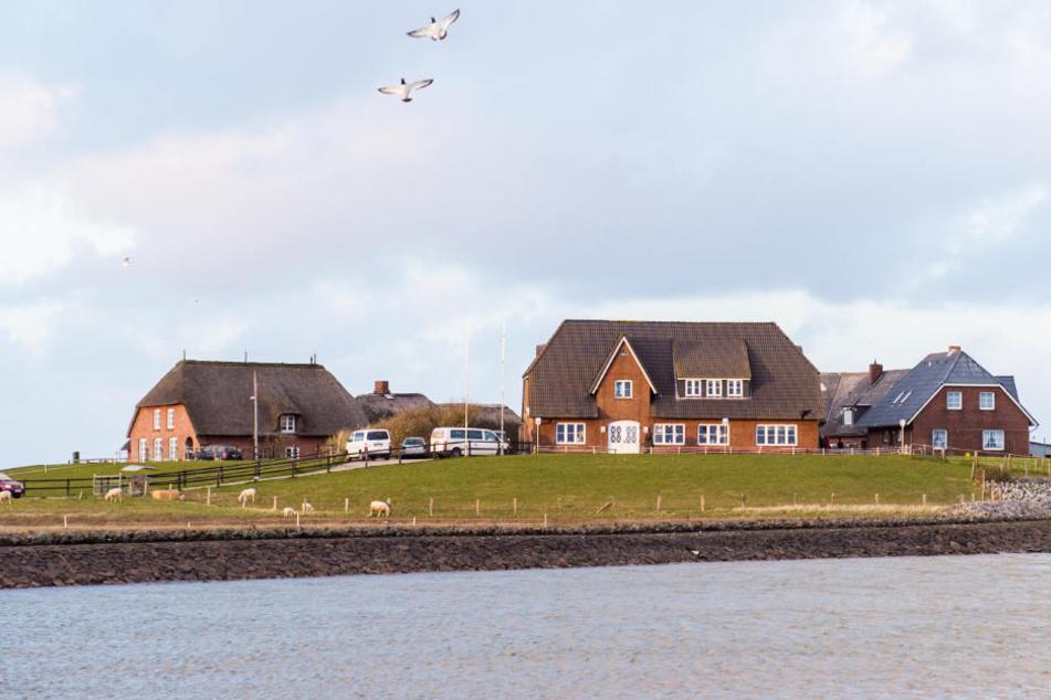 Auf der Hallig Langeneß (Schleswig-Holstein) wohnen über 100 Menschen - trotzdem soll sie öfter überflutet werden.