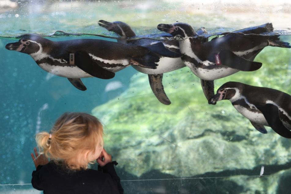 Im Frankfurter Zoo sind die Zeitslots bis Ende Mai ausgebucht.