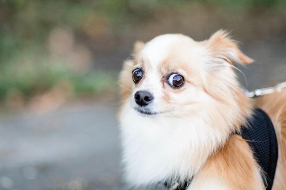 Davor haben Hunde richtig Angst