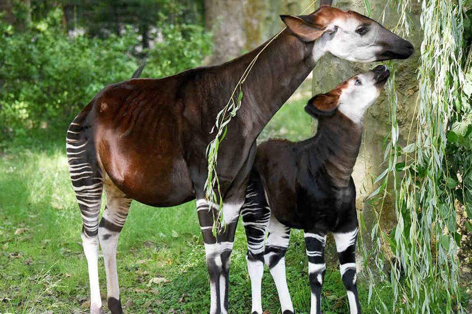 Tut Etwas Damit Diese Seltenen Tiere Nicht Aussterben