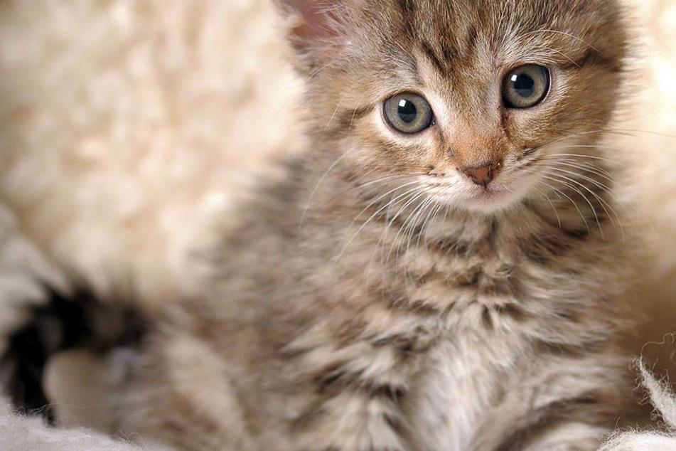 Die Katzen wurden schwer verletzt in einem Stall in Rodewitz gefunden. (Symbolbild).