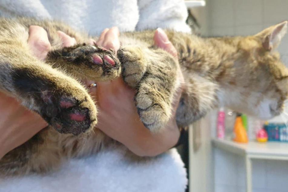 Kinder sollen die Katze mit Silvesterböllern gequält haben. Pfötchen und Nase des Tieres sind verbrannt.