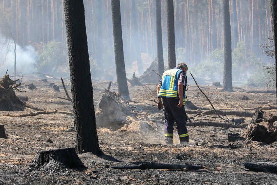 Ein Feuerwehrmann sucht am Waldboden nach Glutnestern. Überall qualmt es um ihn herum.