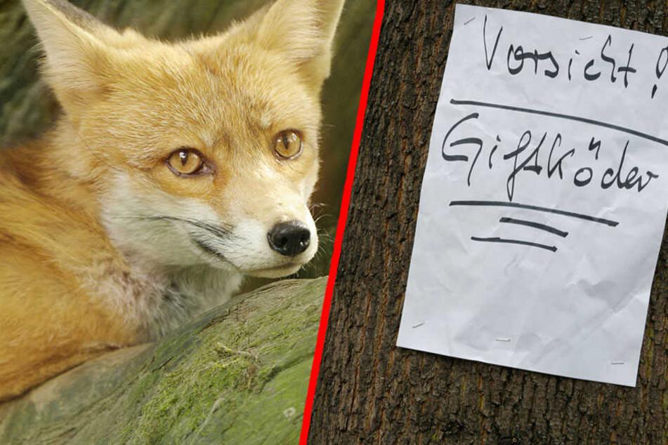 Fuchshasser oder Krankheit? Was werden die Ermittlungen ans Tageslicht führen? (Bildmontage)