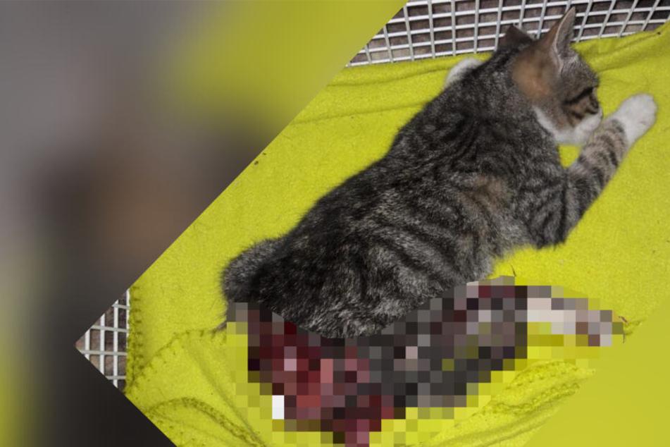 Grausame Bilder! Katze wird in Gera überfahren und stirbt