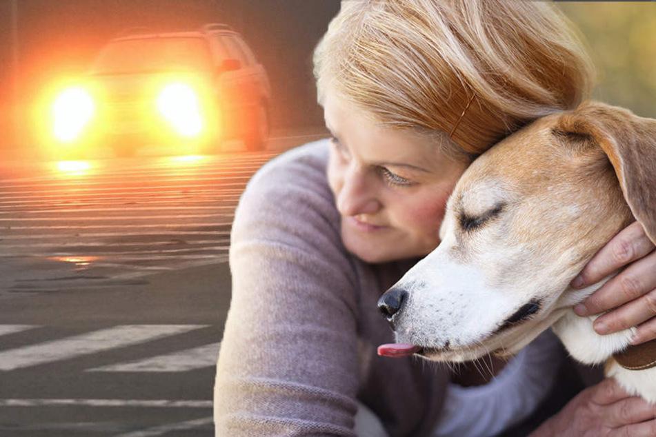 Den toten Hund in den Armen, wurde die Frau selbst von einem Auto erfasst. (Bildmontage)