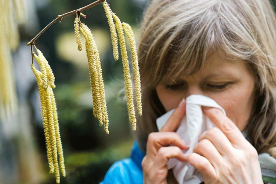 Seit Jahren beobachten Forscher, dass Allergien immer heftiger und häufiger auftreten.