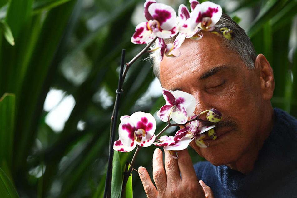 So gut wie diese Orchideen riecht für Joop der Kudamm scheinbar nicht.