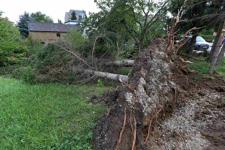 Zahlreiche Bäume wurden bei dem Unwetter entwurzelt.