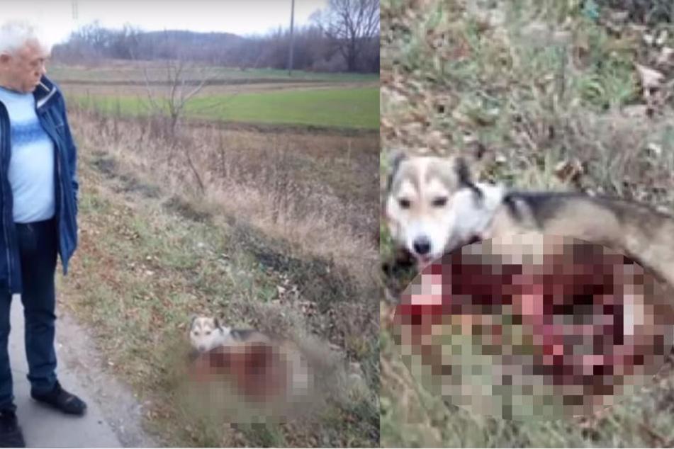 Der Hund lag nach der Tortur in einer Blutlache! Sein Besitzer blickte ihn böse an.