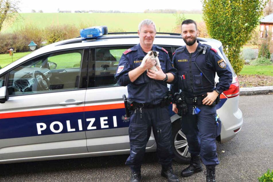 Ronald und Andi von der Polizei in Steyr halten das Kätzchen.